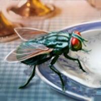 苍蝇模拟器