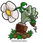 植物大战僵尸下雨版