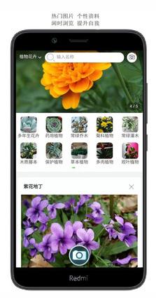 拍照识花app